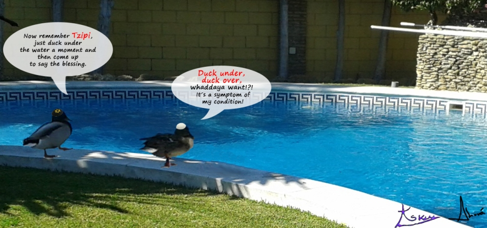 kosher pool ducks